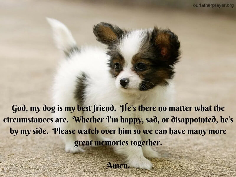 Short prayer for a dog